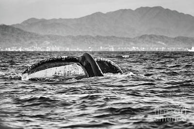 Photograph - Humpback Whale by Marilyn Nieves