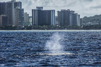 Photograph - Humpback Whale Sounding Honolulu by NaturesPix