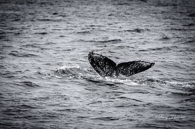 Photograph - Humpback Whale Tail by Roxy Hurtubise
