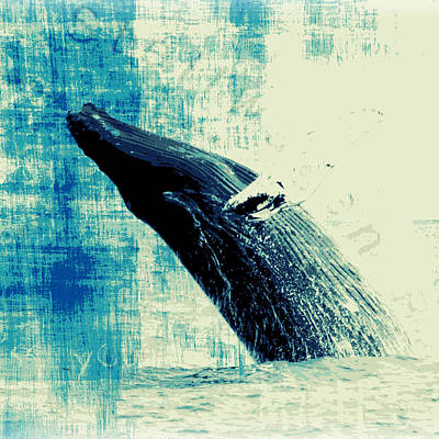 Whale Mixed Media - Humpback Whale V3 by Brandi Fitzgerald