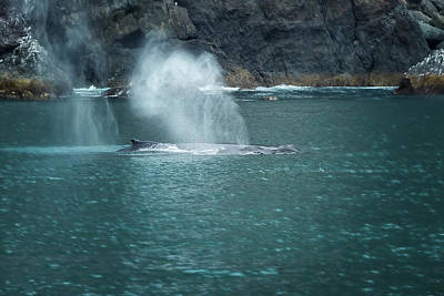 Photograph - Humpback Whales Spouting by Belinda Greb