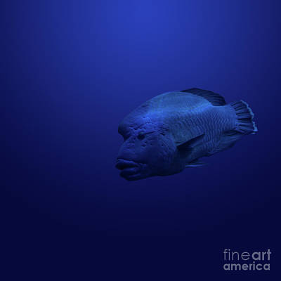 Photograph - Humphead by Andrea Silies