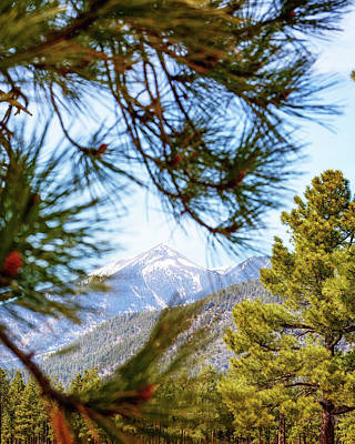 San Francisco Peaks Photograph - Humphreys Mountain Peak Between Pine Trees by Susan Schmitz