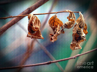Photograph - Hung Out To Dry by Sue Melvin