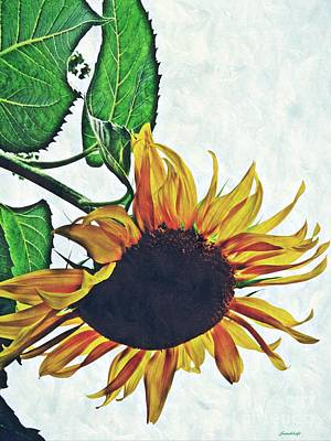 Sunflowers Royalty-Free and Rights-Managed Images - Hung Over by Sarah Loft