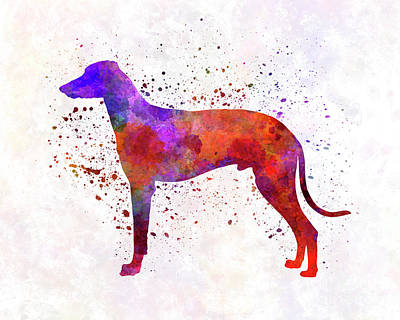 Hungarian Greyhound In Watercolor Art Print by Pablo Romero