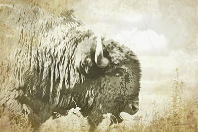 Digital Art - Hungry Buffalo In The Tall Grass by Susan Vineyard