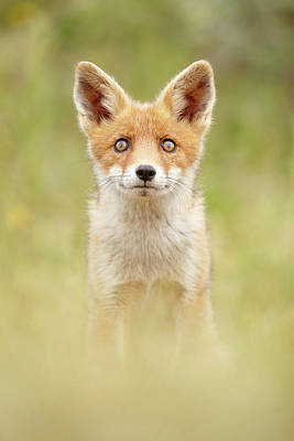 Adorable Photograph - Hungry Eyes _cute Red Fox Cub by Roeselien Raimond