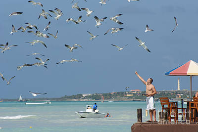 Photograph - Hungry Flock In Aruba by David Birchall