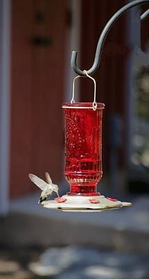 Photograph - Hungry Hummingbird by Kristina Deane