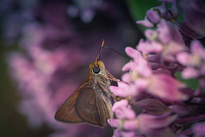 Photograph - Hungry Moth by Michaela Preston