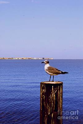 Photograph - Hungry Sea Gull by Gary Wonning