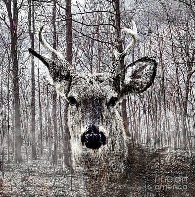Photograph - Hunted by Joann Long