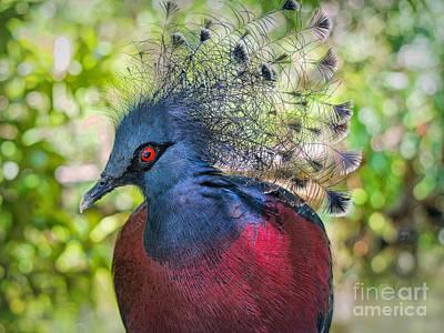 Wild Birds Photograph - Hunted by Judy Kay