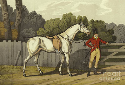 English Riding Painting - Hunter by Henry Thomas Alken