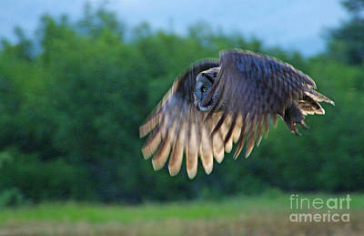 Photograph - Hunter On Silent Wings by Katie LaSalle-Lowery