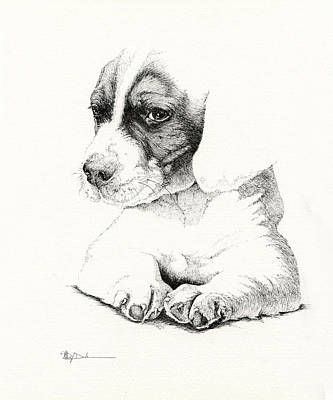 Drawing - Hunters Pup_pen Drawing by Mary Dove