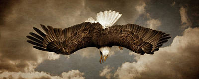 Photograph - Hunting Bald Eagle by Wes and Dotty Weber
