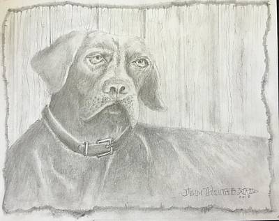 Drawing - Hunting Dog by Jim Hubbard