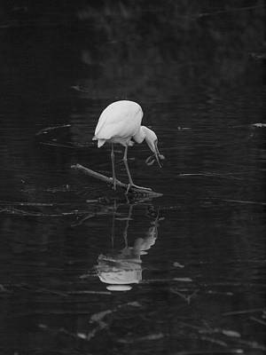 Lake Harris Photograph - Hunting Egret by Joshua House