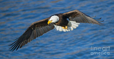 Eagle Photograph - Hunting Eyes by Mike Dawson