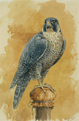 Hunting Bird Painting - Hunting Falcon by Alexander Sergeevich Khrenov
