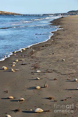 Photograph - Hunting For Sea Shells by Sandra Huston