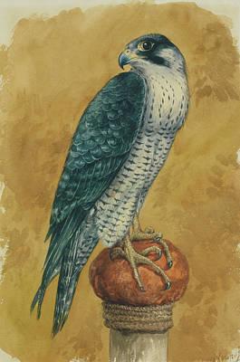Hunting Hawk Art Print