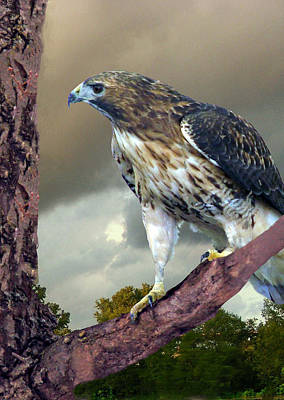 Red Tail Hawk Digital Art - Hunting Hawk by Mary Dreher
