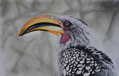 Hornbill Mixed Media - Hunting Hornbill by Anne Cowell