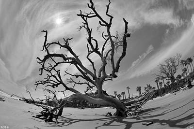 Photograph - Hunting Island Beach And Driftwood Beaufort Sc Black And White by Lisa Wooten