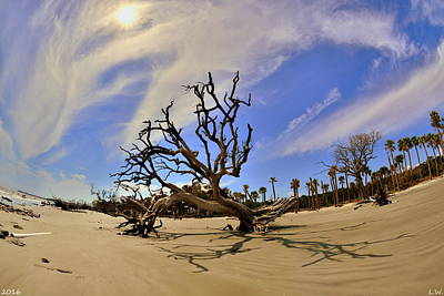 Photograph - Hunting Island Beach And Driftwood by Lisa Wooten