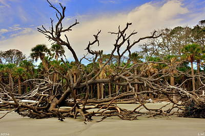 Photograph - Hunting Island Driftwood Beach Beaufort Sc by Lisa Wooten