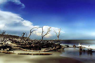 Photograph - Hunting Island by Jessica Brawley