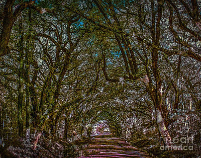 Hunting Island Path Art Print