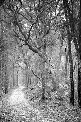 Hunting Island Path  Art Print by Phill Doherty