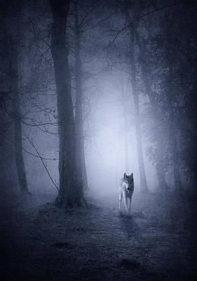 Wolf Digital Design Photograph - Hunting Wolf by Svetlana Sewell