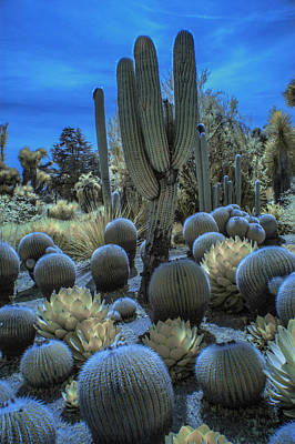 Photograph - Huntington Botanical Desert Garden In California In Color Infrared by Randall Nyhof