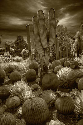 Photograph - Huntington Botanical Desert Garden In California In Sepia Tone by Randall Nyhof