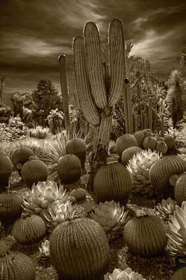 Photograph - Huntington Botanical Desert Garden In California In Sepia Tone by Randall Nyhof