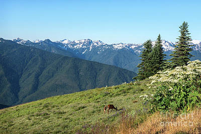 Photograph - Hurricane Ridge by Sharon Seaward