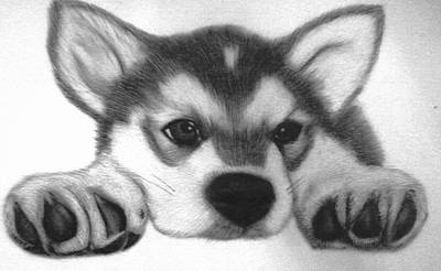 Huskie Wall Art - Drawing - Huskie Pup by Susan Barwell