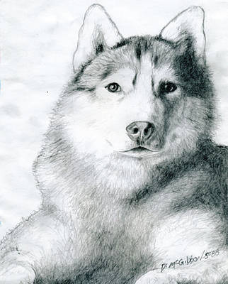 Drawing - Husky by Dan McGibbon