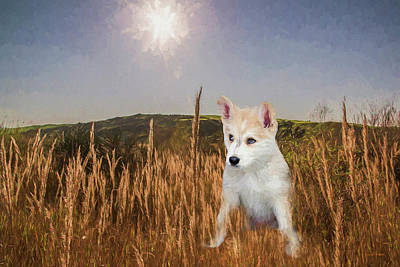 Photograph - Husky Puppy In The Field by Ericamaxine Price