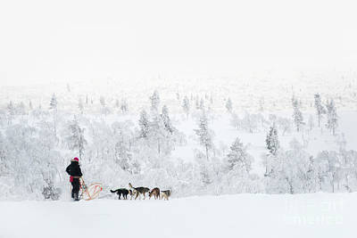 Photograph - Husky Safari by Delphimages Photo Creations