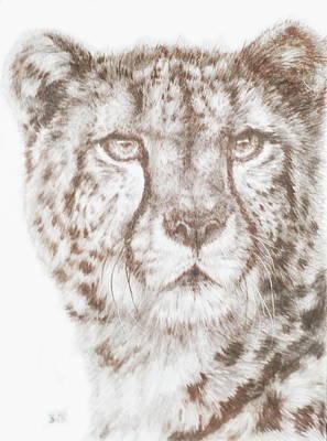 Cheetah Drawing - Hustle by Barbara Keith