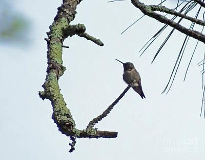 Photograph - Hummingbird 51 As Art by Lizi Beard-Ward