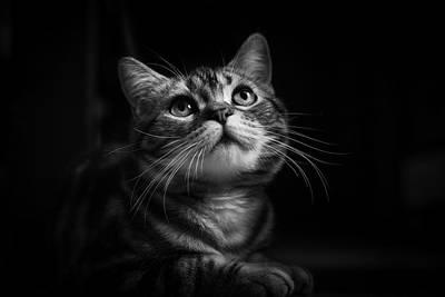 Huzi The Cat Art Print by Loody