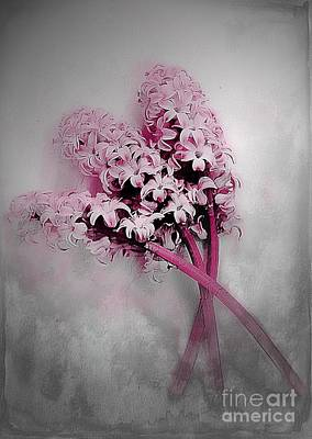 Photograph - Hyacinth Dust by Clare Bevan