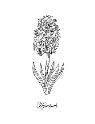 Drawing - Hyacinth Flower Botanical Drawing Black And White by Irina Sztukowski
